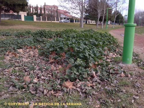 La noticia calahorra la rioja el pr denuncia el estado de los parques y jardines de calahorra - Jardines de azahar rioja ...